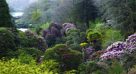 Jungle Trek, Trebah Garden, Falmouth