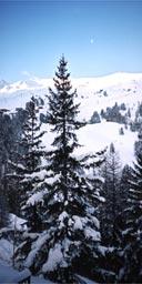 View from chalet, La Plagne