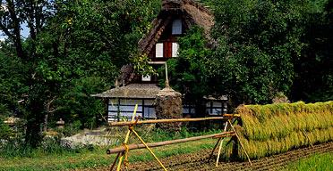 Rice farm, Takayama, Japan