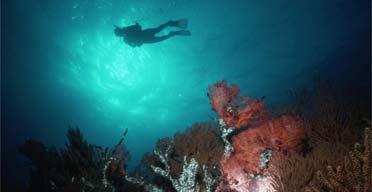 Diving: Sea of Cortez