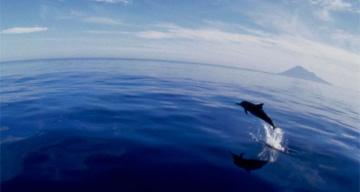 Dolphin, Sulawesi