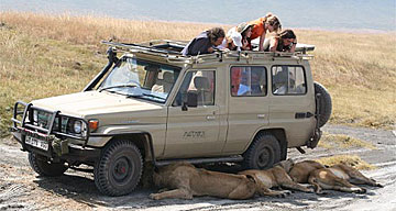 Lions enjoy the shade under a truck in Africa