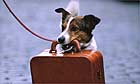 Pet dog travellling