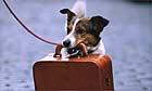 Pet dog travellling