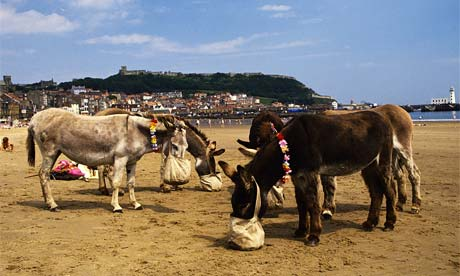 Donkeys on Scarborough beach, North Yorkshire, England