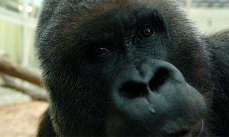 五分之一哺乳动物种类已濒临灭绝