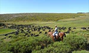Horseriding in Sierra de Gredon, Spain