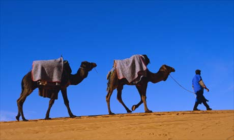 Camel train through desert, Morocco, North Africa