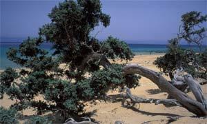 Agios Ioannis beach, Gavdos, Greece