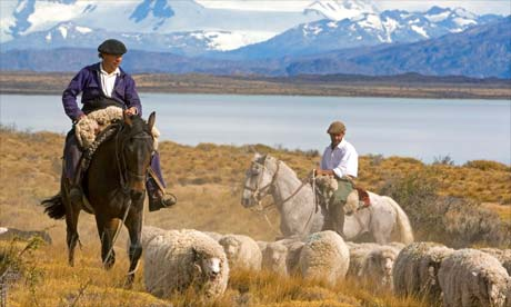 Can sheep restore Patagonia's grasslands? – Ellie Winninghoff
