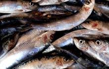 Fish at Pyrmont market