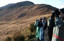 Looking for golden eagles in Mull, Scotland