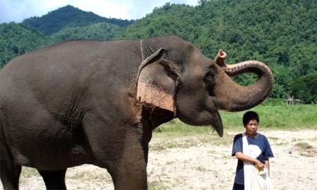 Elephant on a conservation holiday