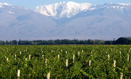 Salentein Vineyards in Argentina