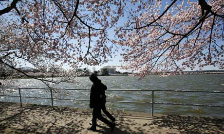 A couple walks under cherry trees in Washington DC, US