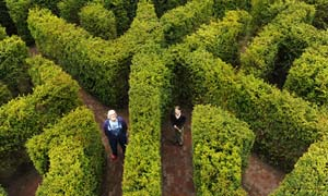 Big Chill: Simon Gandolfi and head gardener Hannah Wilkes in the maze at Hampton Court