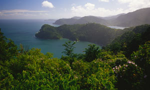 Forest above Maracas beach, Trinidad and Tobago