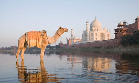 Camel in the river, Taj Mahal, Agra, India
