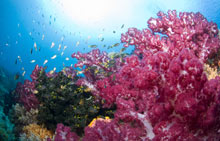 A coral reef in Raja Ampat, Indonesia.