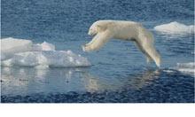 Leaping bear