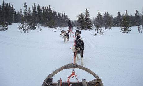 Dog sledding in Are