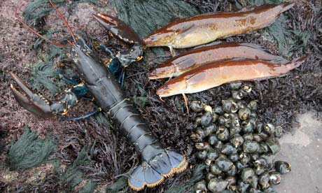 Lobster, rock ling and winkles