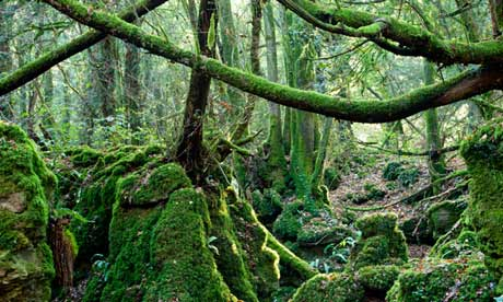 Puzzlewood in the Forest of Dean, Gloucestershire