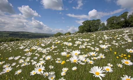 Meadows in UK