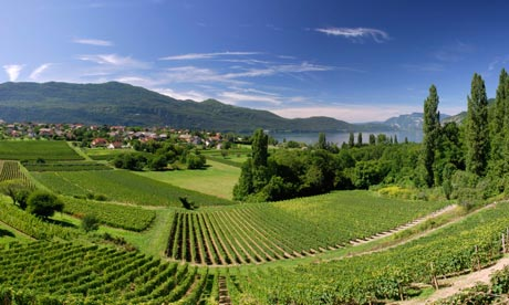 D Vine Winery Tours