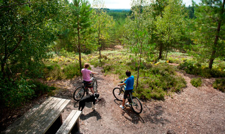 |Cycling at Moors Valley Country Park