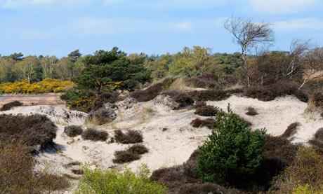 Studland Beach nature reserve, Dorset
