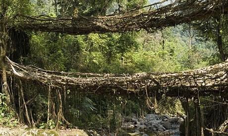 Double-decker root bridge in Meghalaya, India