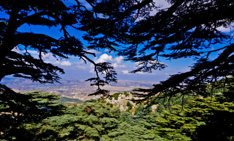 Chouf mountains viewed from a cedar tree