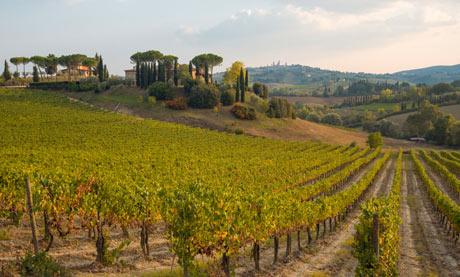 Winery near San Gimignano in Tuscany
