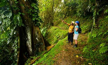 Hiking the Main Ridge, Tobago