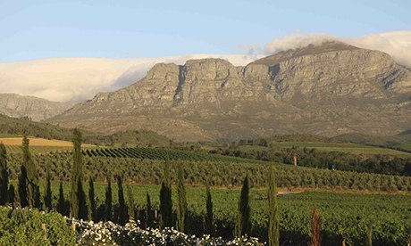 South Africa's Cape wine route: top 10 guide