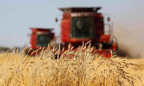 food prices wheat harvesting Alberta