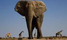 Low angle shot of an Elephant and Giraffes at the Etosha National Park, Namibia