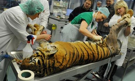 malayan tiger conservation
