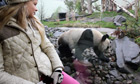 A girl loks at Tian Tian the Giant Panda in Edinburgh Zoo in Edinburgh