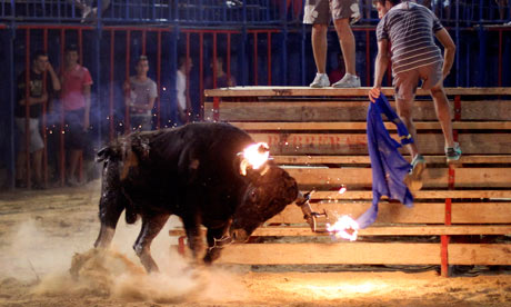 Raton the bull at a festival in Sueca,near Valencia, Spain