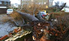 A tree is uprooted by strong winds in Havant, Hampshire