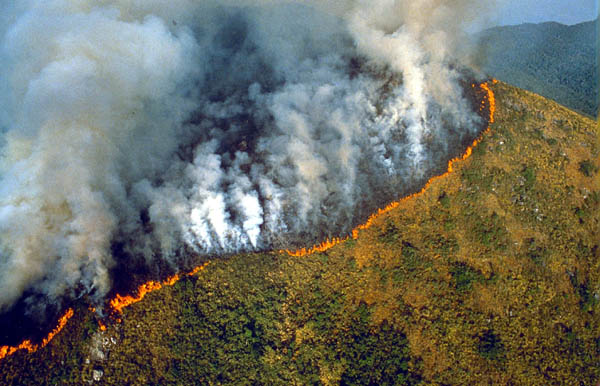 Deforestation In The Amazon Environment The Guardian