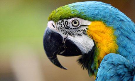 [Image: Parrot-001.jpg]