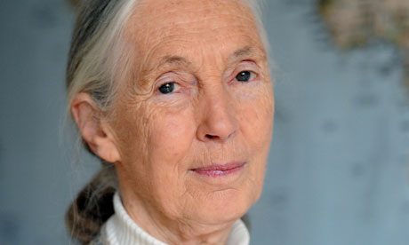 Leadership profile, jane goodall essay