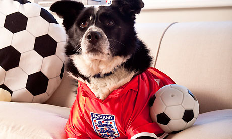 Pets at Home - England top