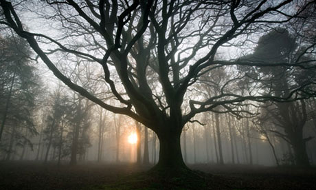 Photographing Trees Edward Parker