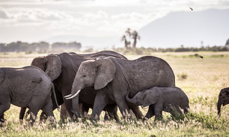 Google Earth and drones help save Kenya's elephants