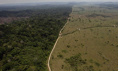 Amazon deforestation increased by one-third in past year ...
