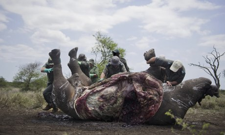 More than 1,000 rhinos killed in South Africa in 2013